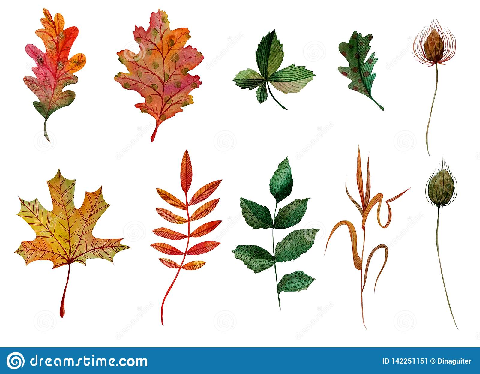 Bur травинки каштана плода шиповника клена дуба листьев осени набора элементов акварели ashberry