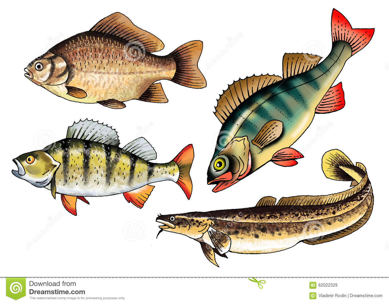 Spawning Cartoons Illustrations Vector Stock Images