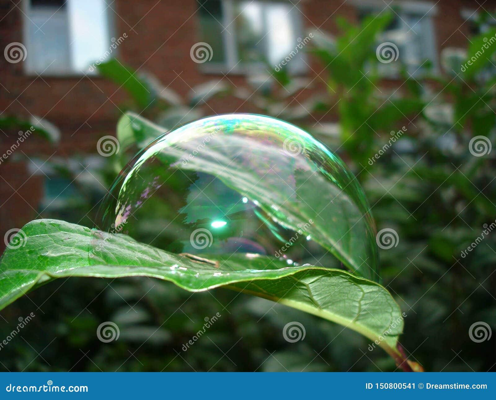Burbuja en la hoja después de la lluvia