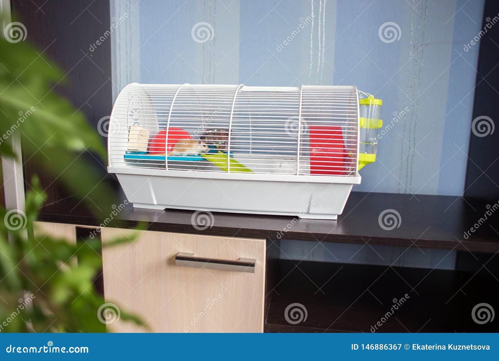 Buren för gnagarekostnader i en möblemangvägg Hålla av gnagare i husvillkor husdjur