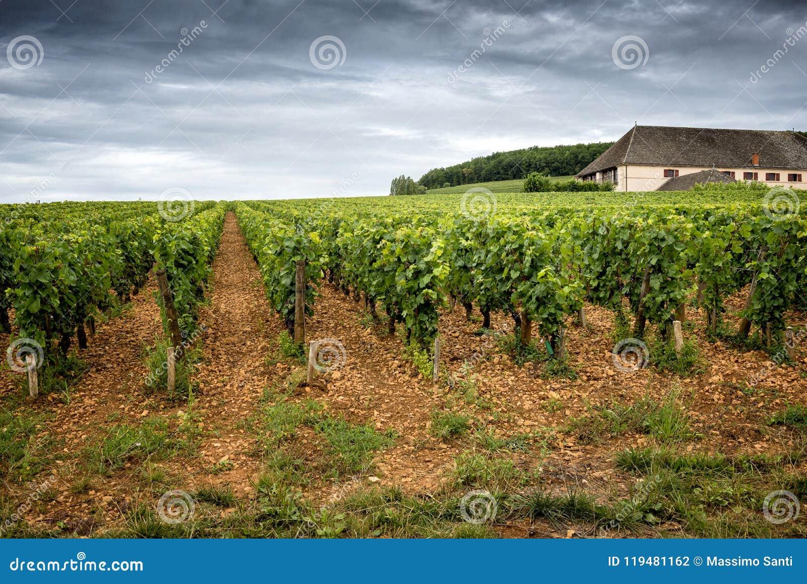 Burgundy, πολύ κάστρο πύργων περιβάλλεται από πολλά στρέμματα των αμπελώνων και είναι μεγάλοι παραγωγοί κρασιού Γαλλία