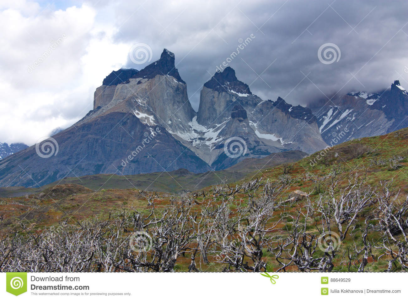 The burned-down trees against the background of Cuernos del Paine in national park of Torres del Paine in Chile