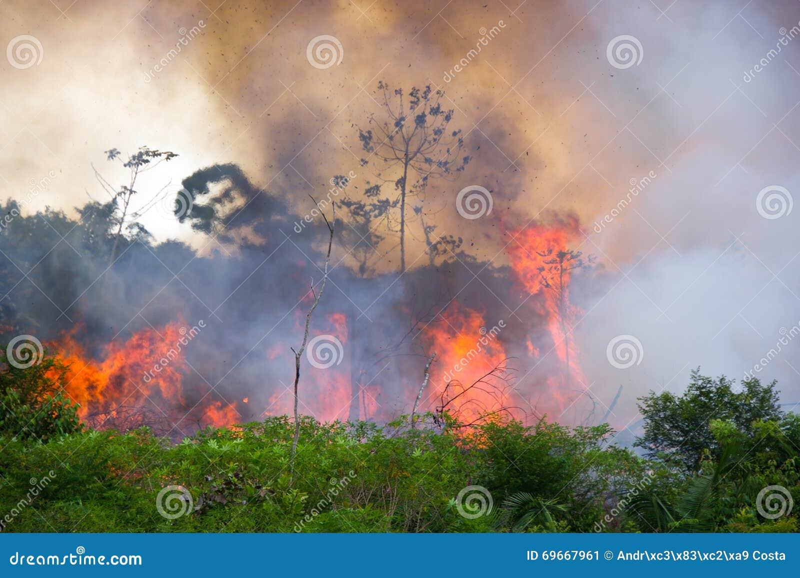 Burning d Amazone de Brésilien