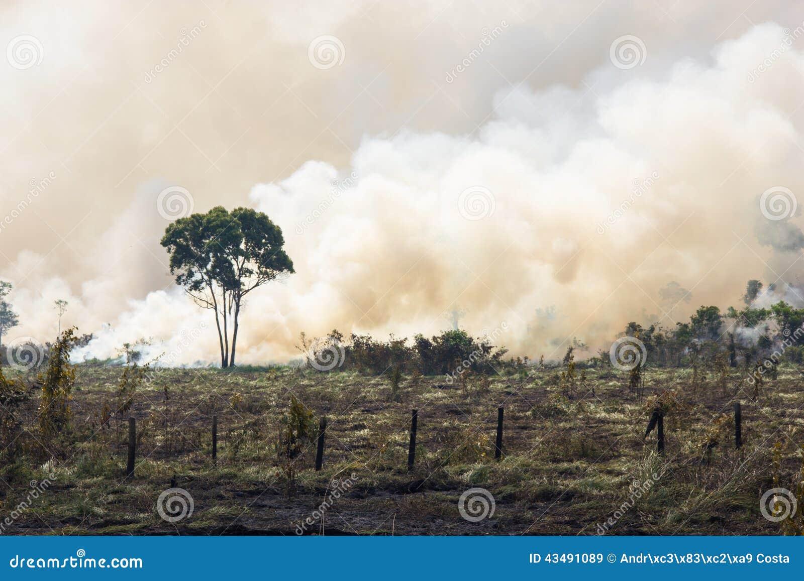 Burning de Amazónia do brasileiro