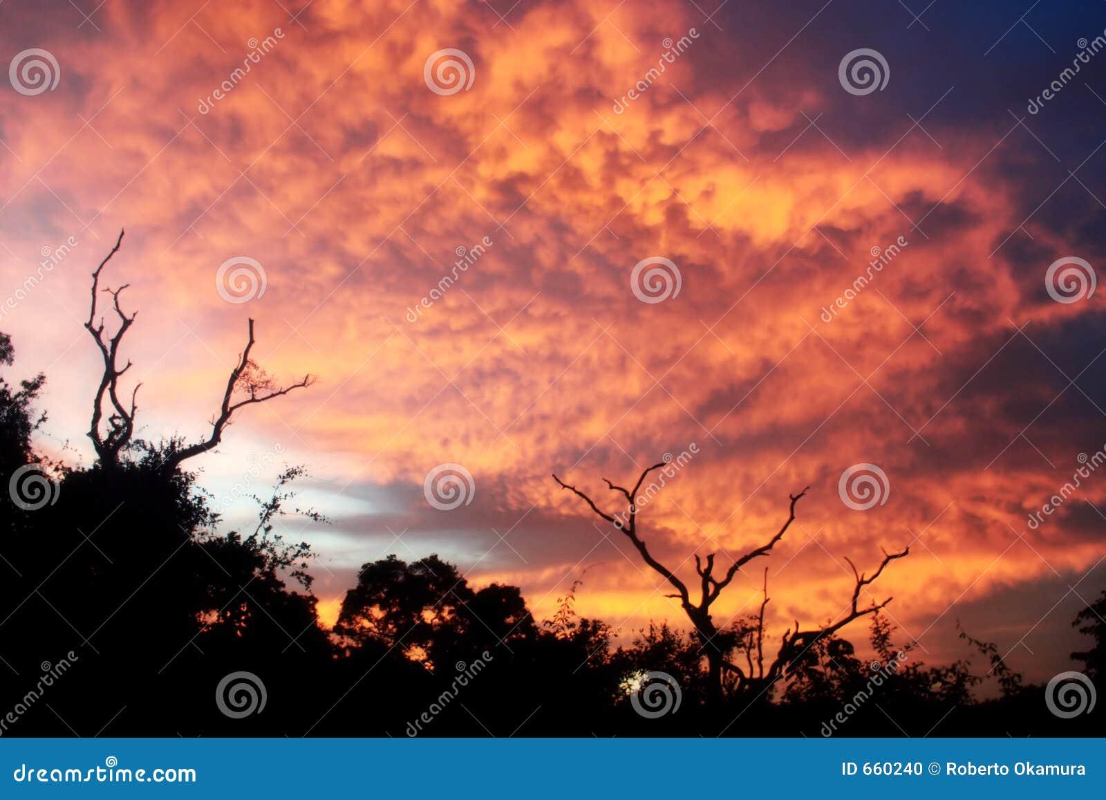Burnning Himmel