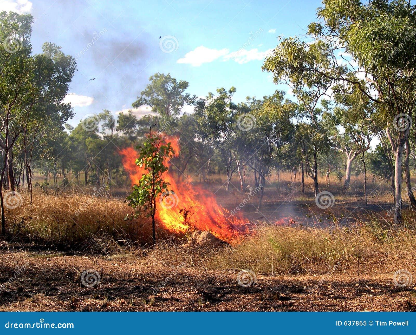 Download Burnoff Австралии стоковое изображение. изображение насчитывающей отражение - 637865