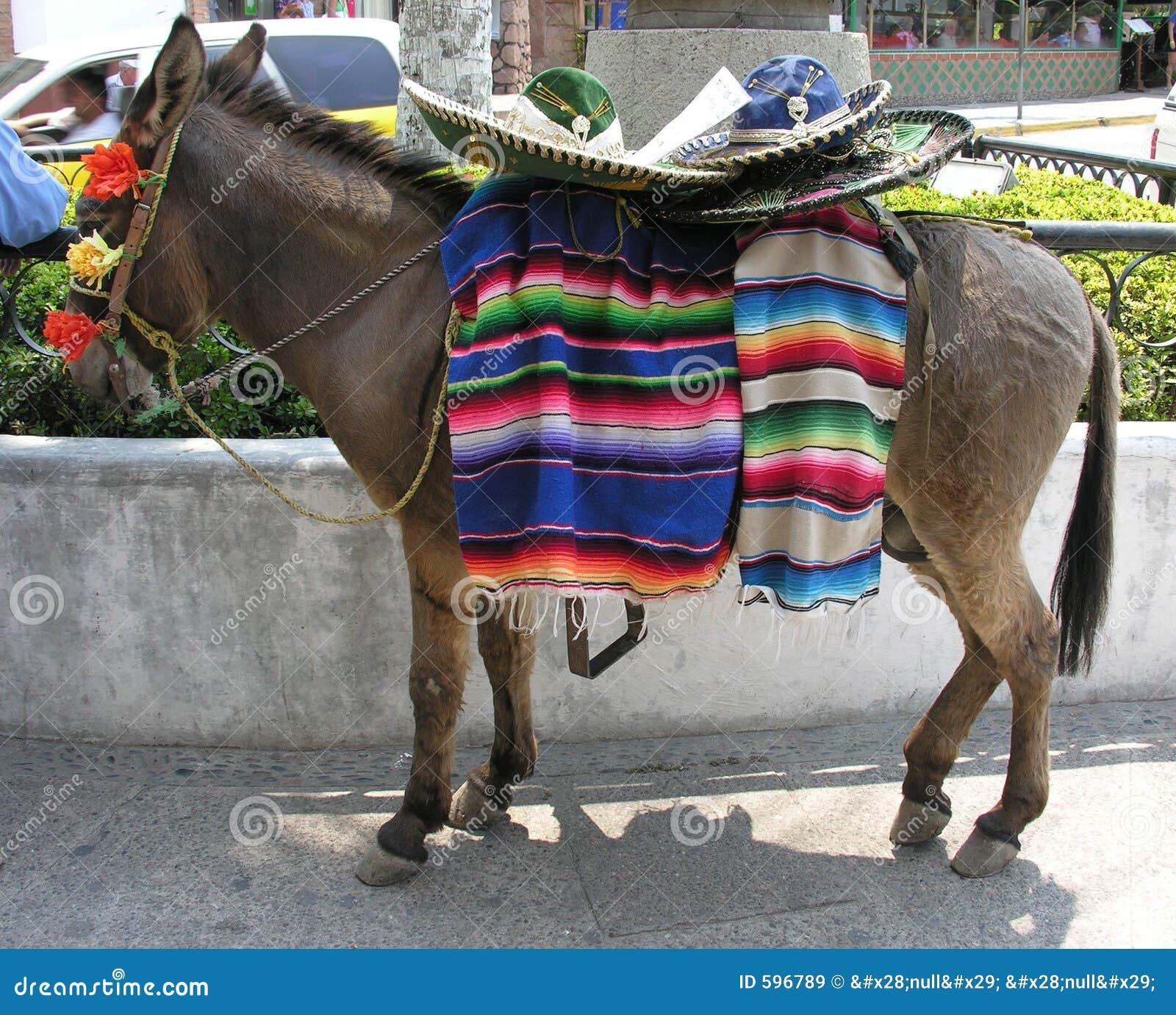 Burro mexicano