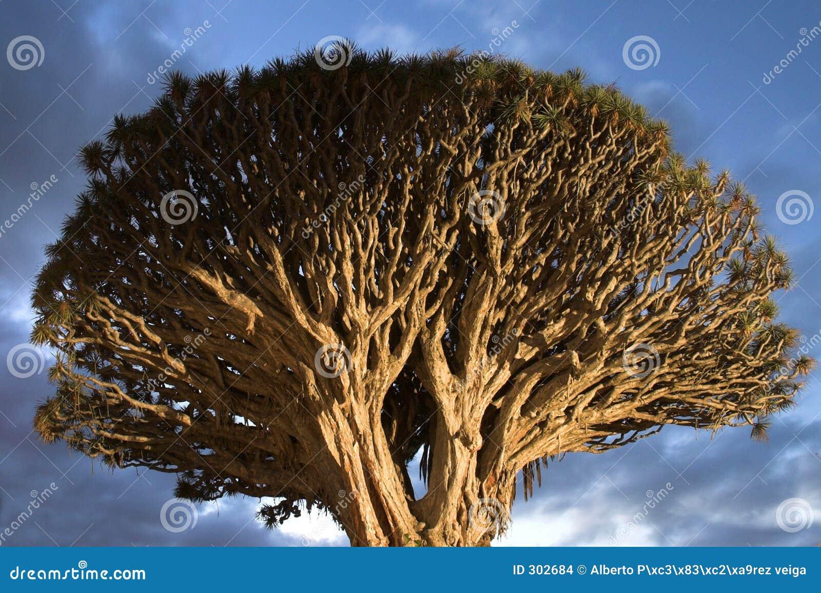 Burzliwe drzewo nieba