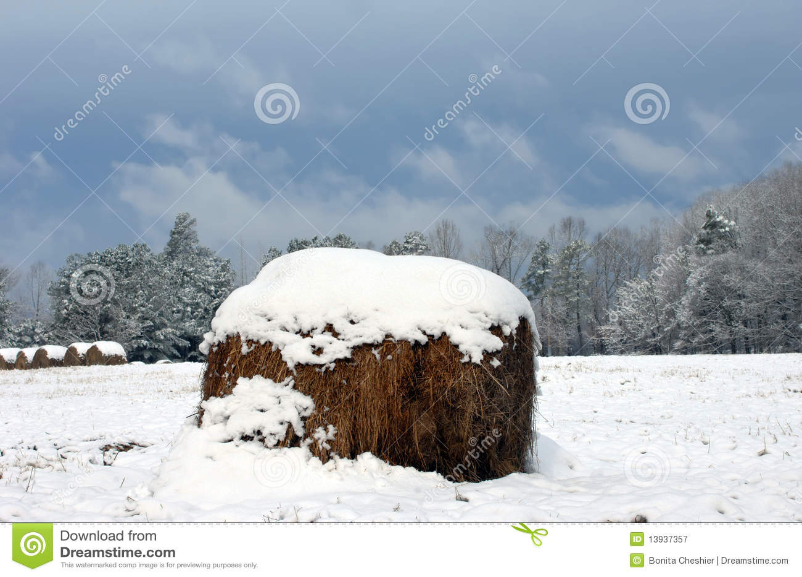 Burzy doradcza zima