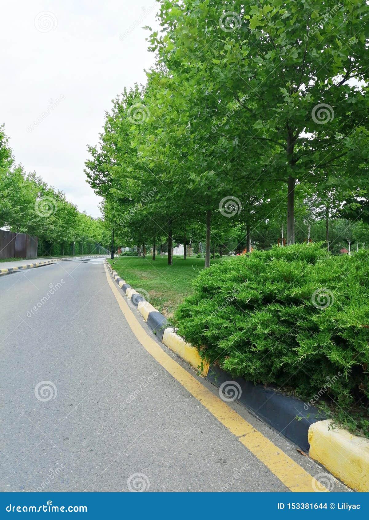 Bush, árboles y marcas de camino