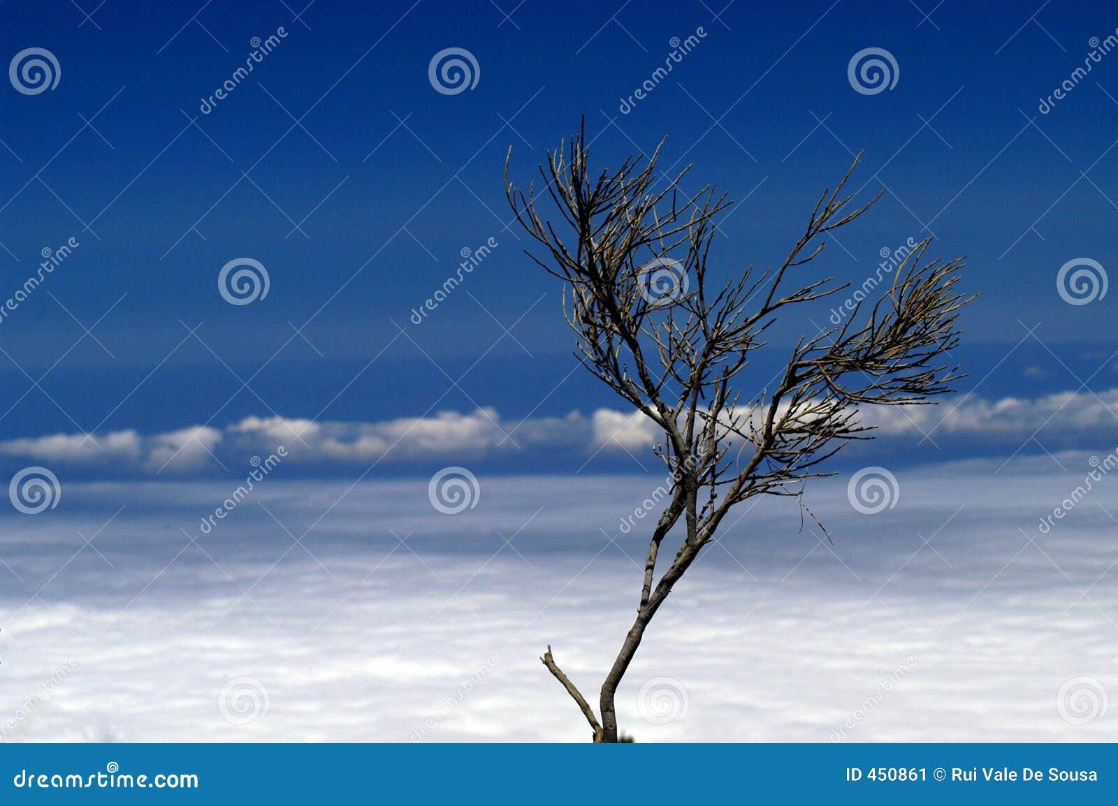 Download Bush stock image. Image of clouds, trunk, smog, bush, flora - 450861