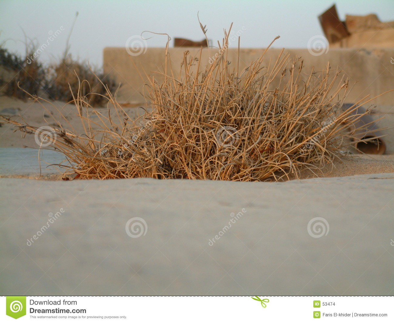 Download Bush photo stock. Image du épine, sable, course, épines - 53474