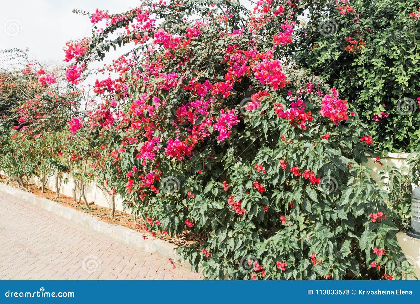 Bush con las flores cerca de la casa en un día de verano