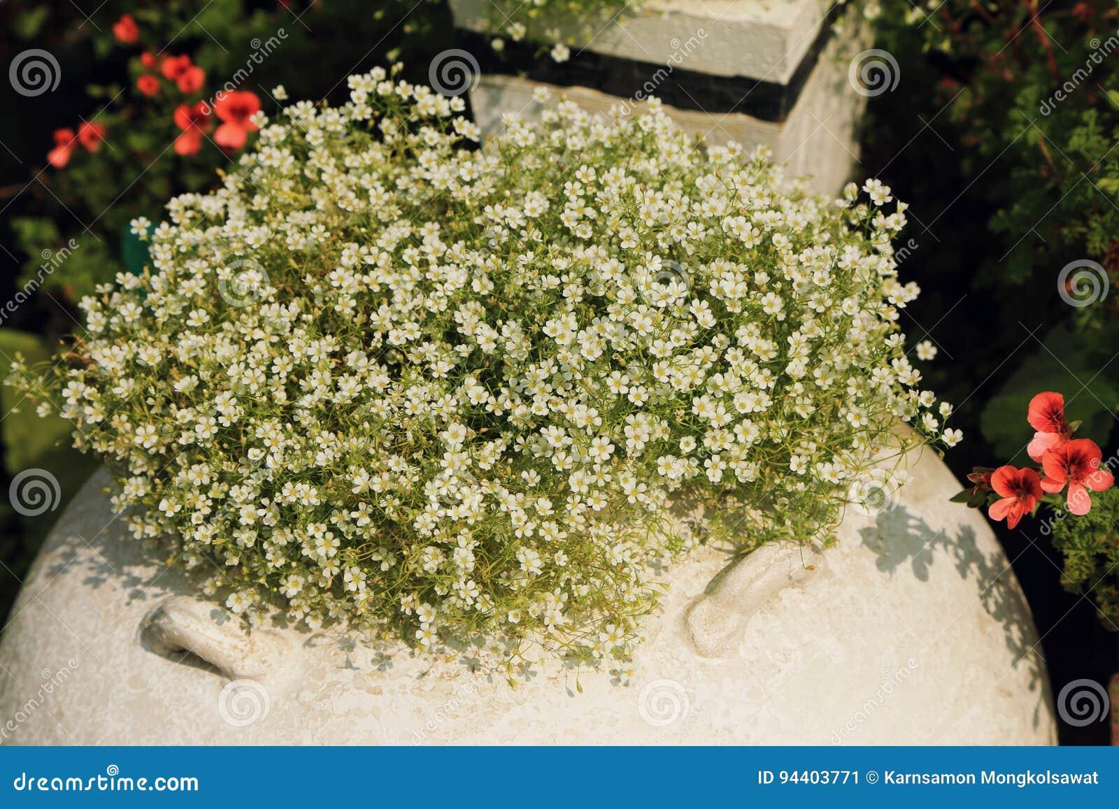 Vasi Bianchi Per Fiori Da Esterno.Bush Di Piccoli Fiori Bianchi In Vaso Da Fiori Decorato In