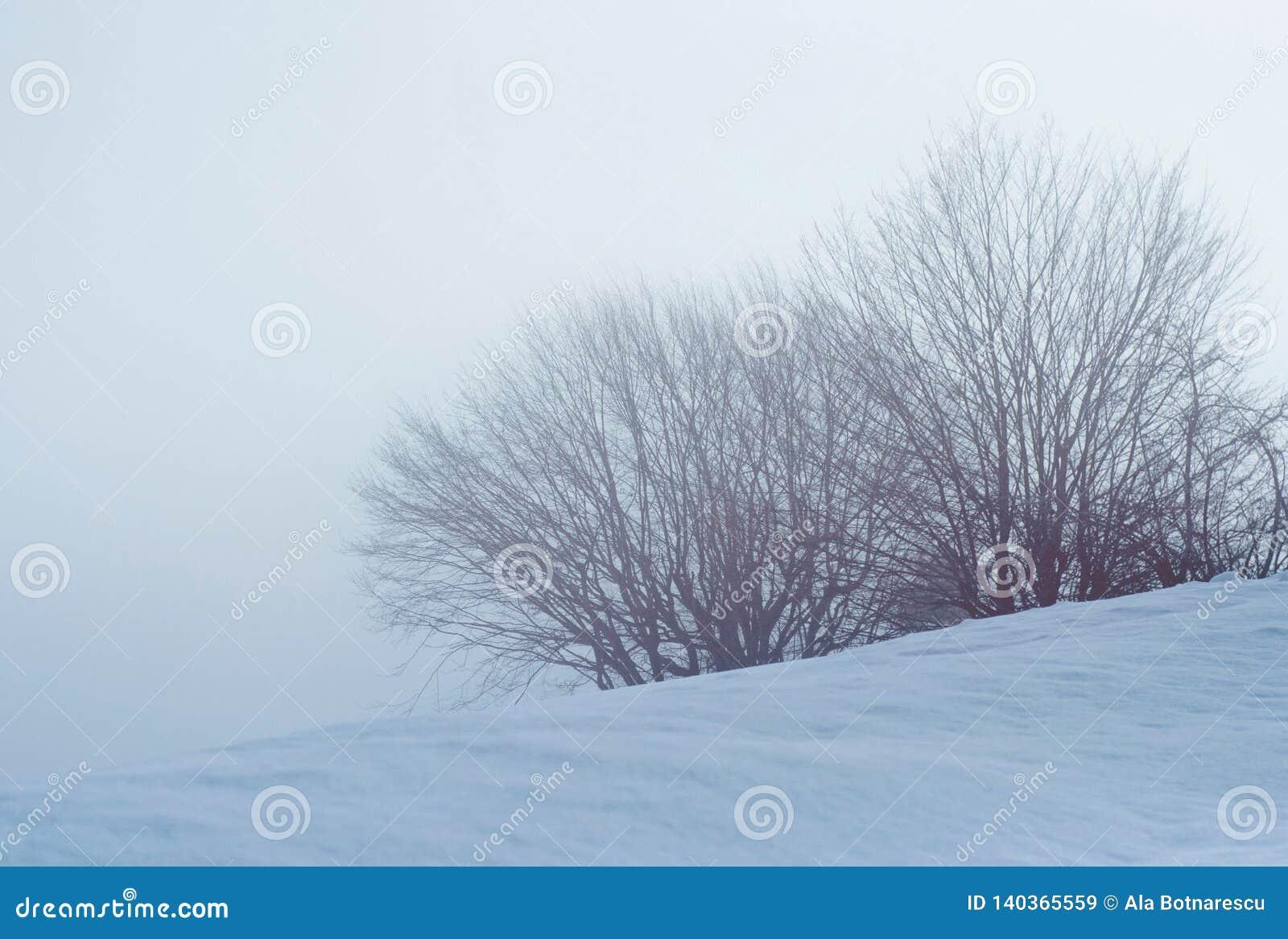 Bush en bomen met sneeuw in een mistige dag wordt behandeld die