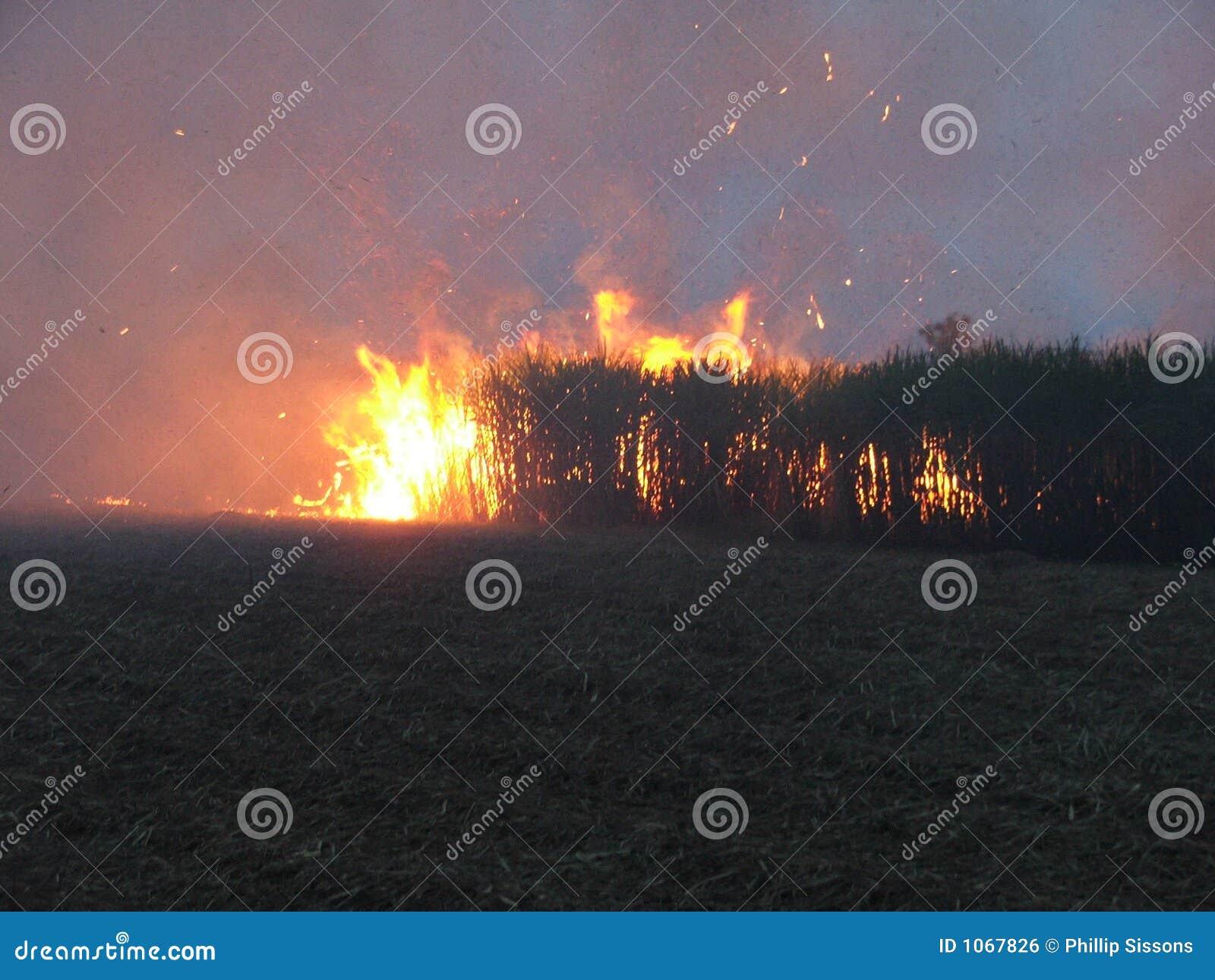 Bush-Feuer 2