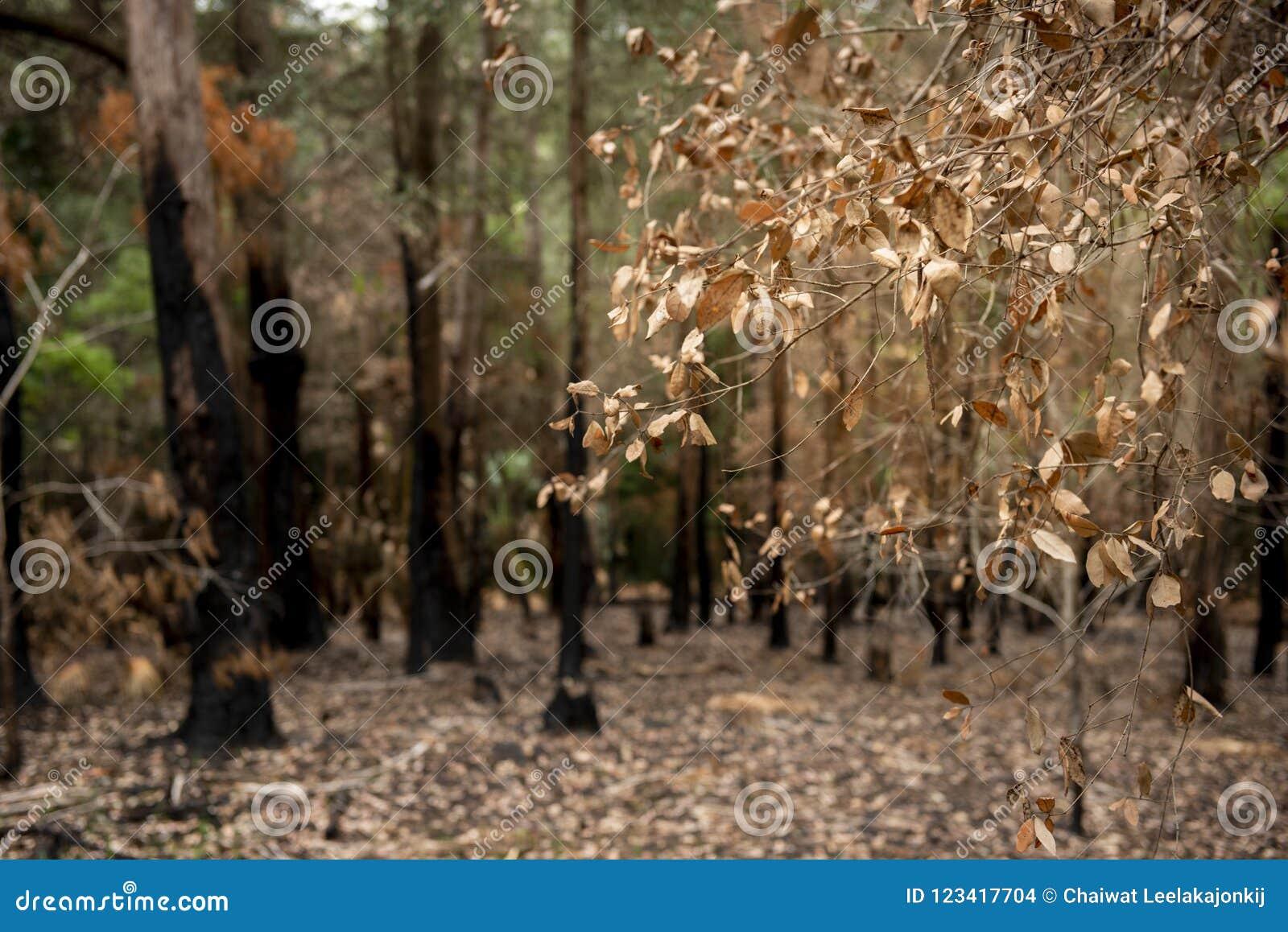 Bush-Feuer in NSW Australien