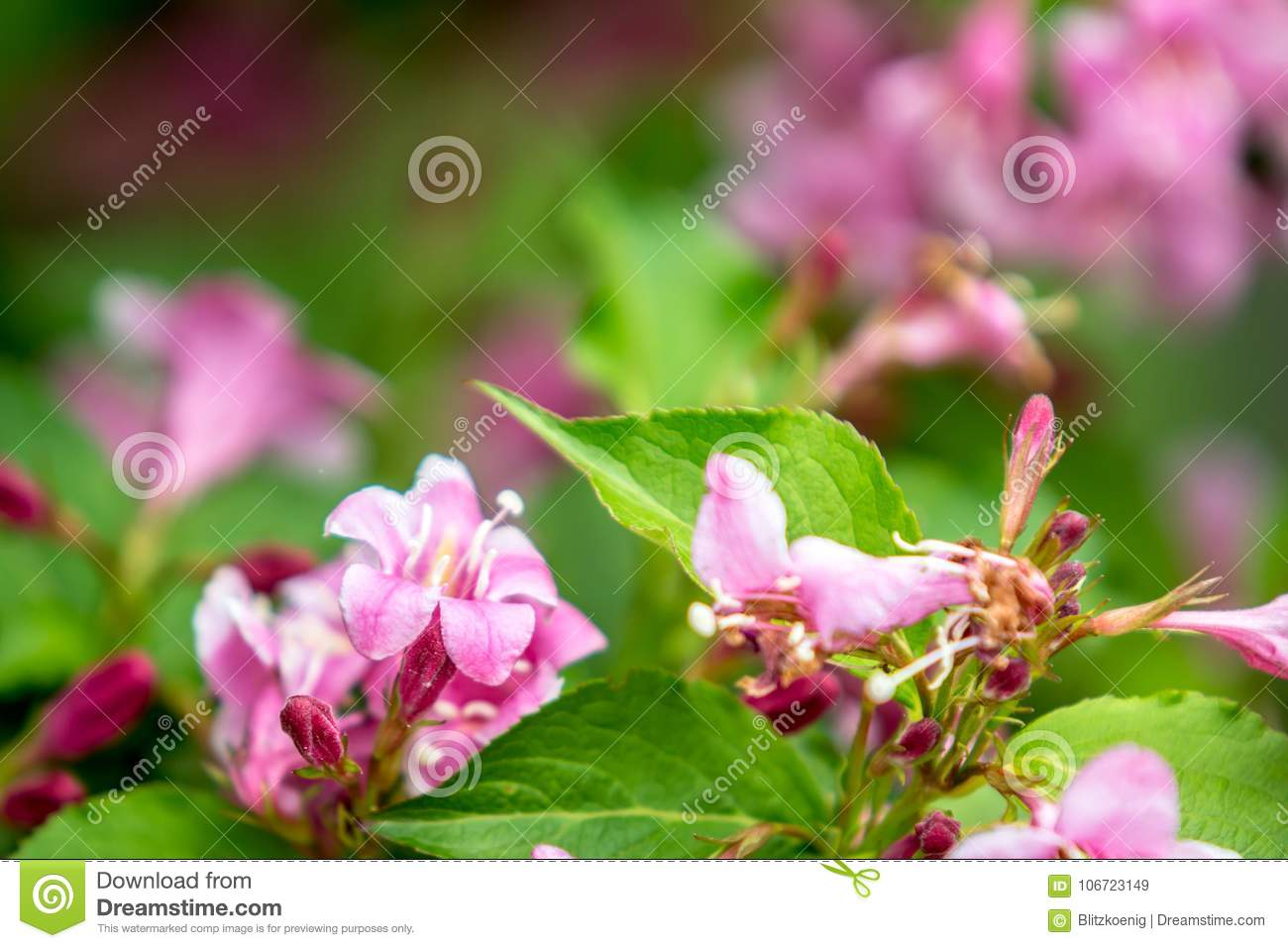 Little pink flowers background stock image image of botany grass download comp mightylinksfo