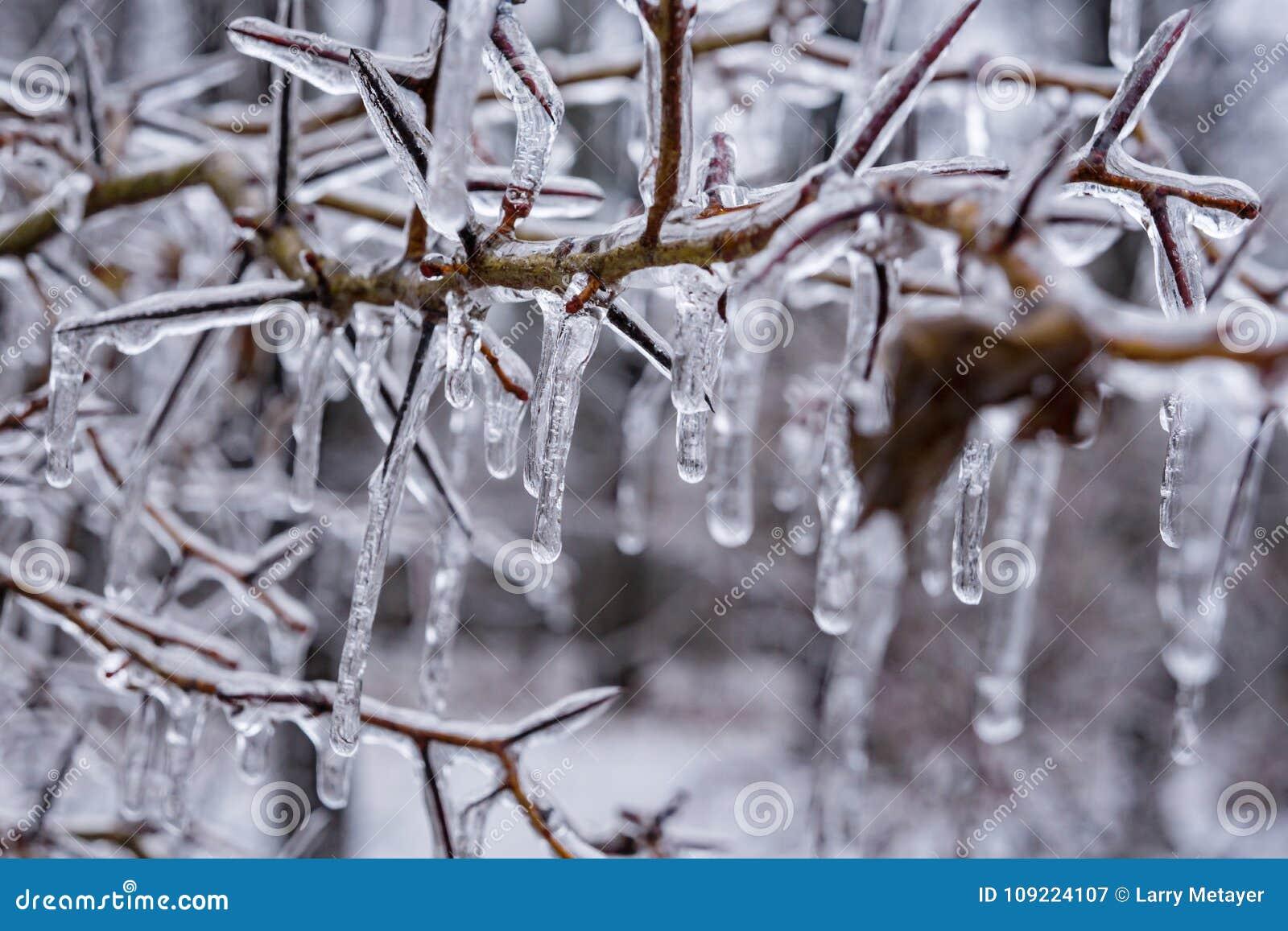 Bush Obramowany w lodzie