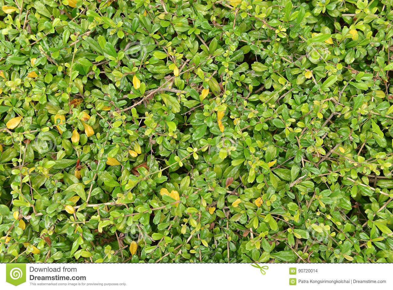 Bush Seamless Texture Background Stock Images - 1,256 Photos