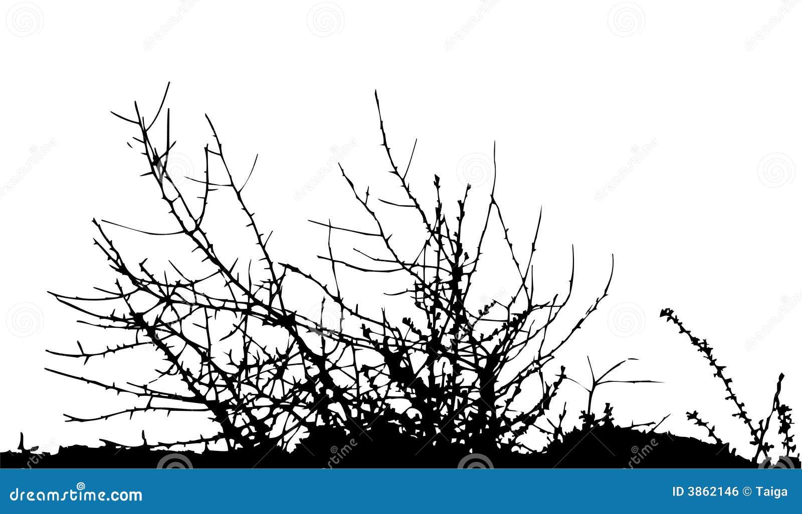 bush    silhouette    vector stock vector  illustration of