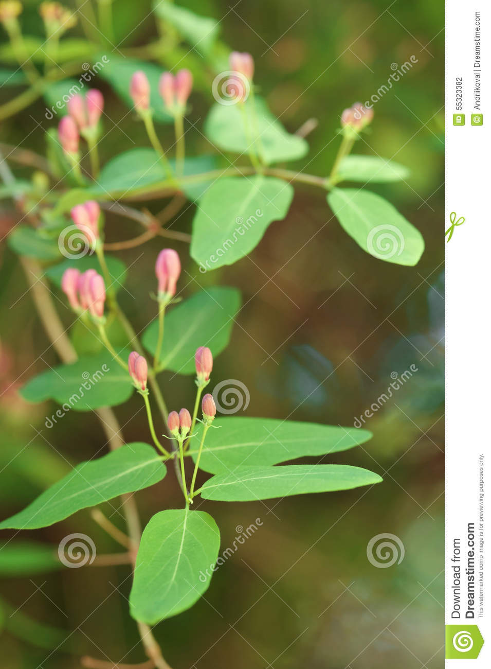 Bush with small pink flowers stock photo 55323382 megapixl bush with small pink flowers mightylinksfo
