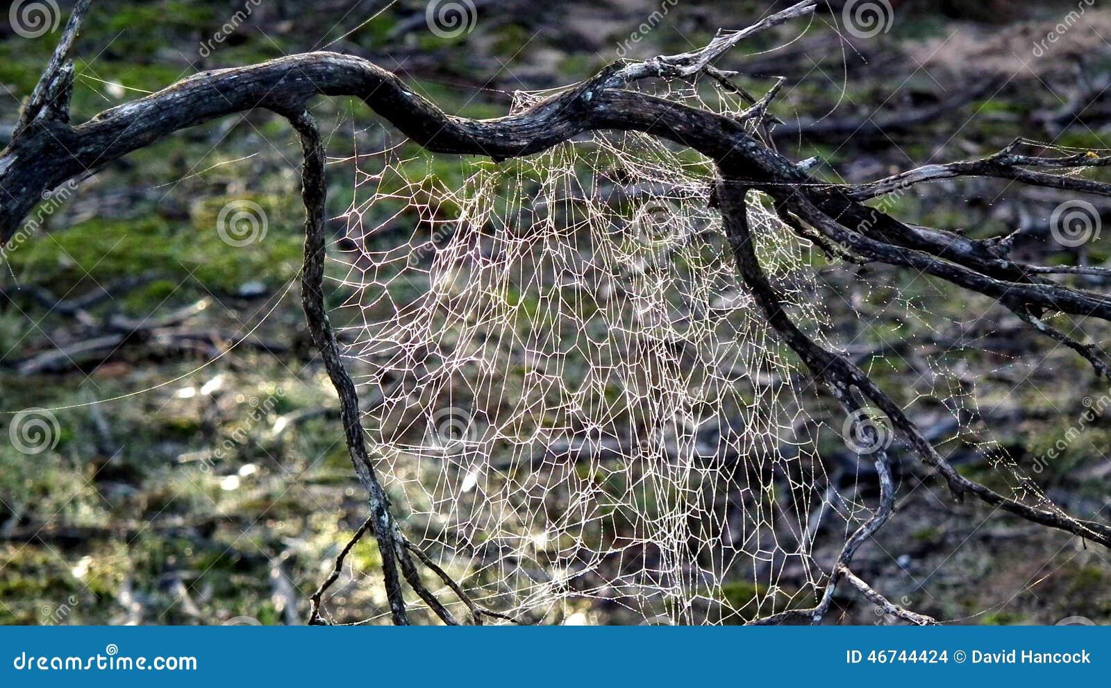 Bush spinnenweb op mallee achtergrond stock foto afbeelding 46744424 - Bush architectuur ...