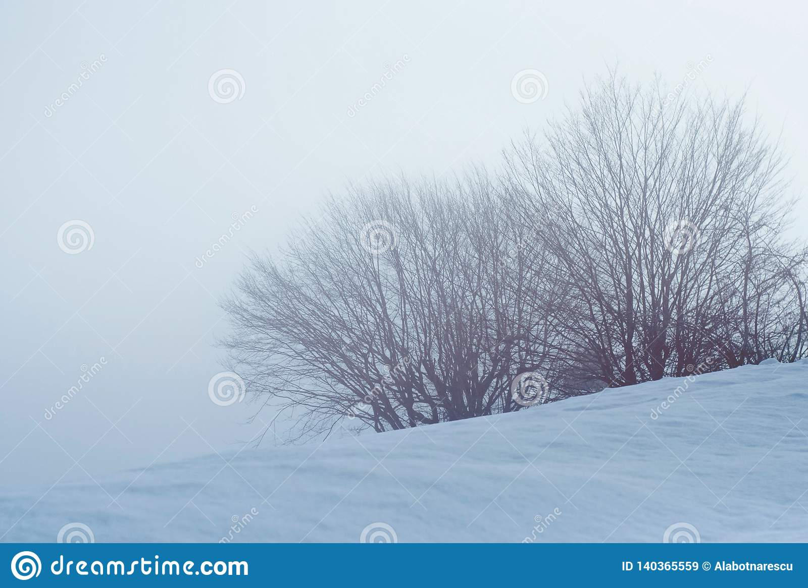 Bush and trees covered with snow in a foggy day