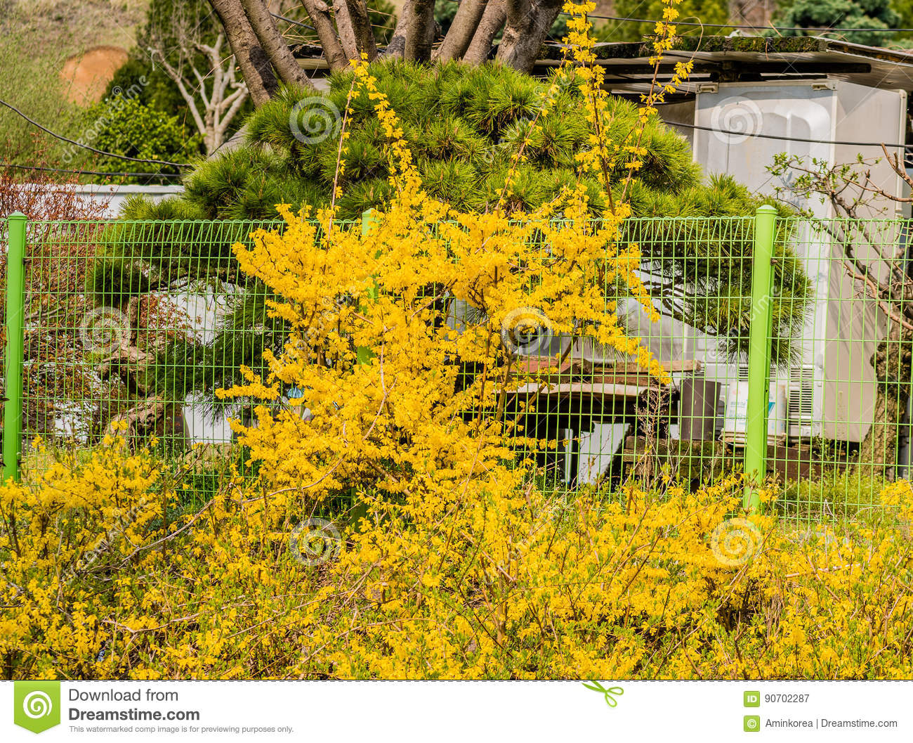 Bush Of Yellow Flowers And Green Fence Stock Image Image Of Gift