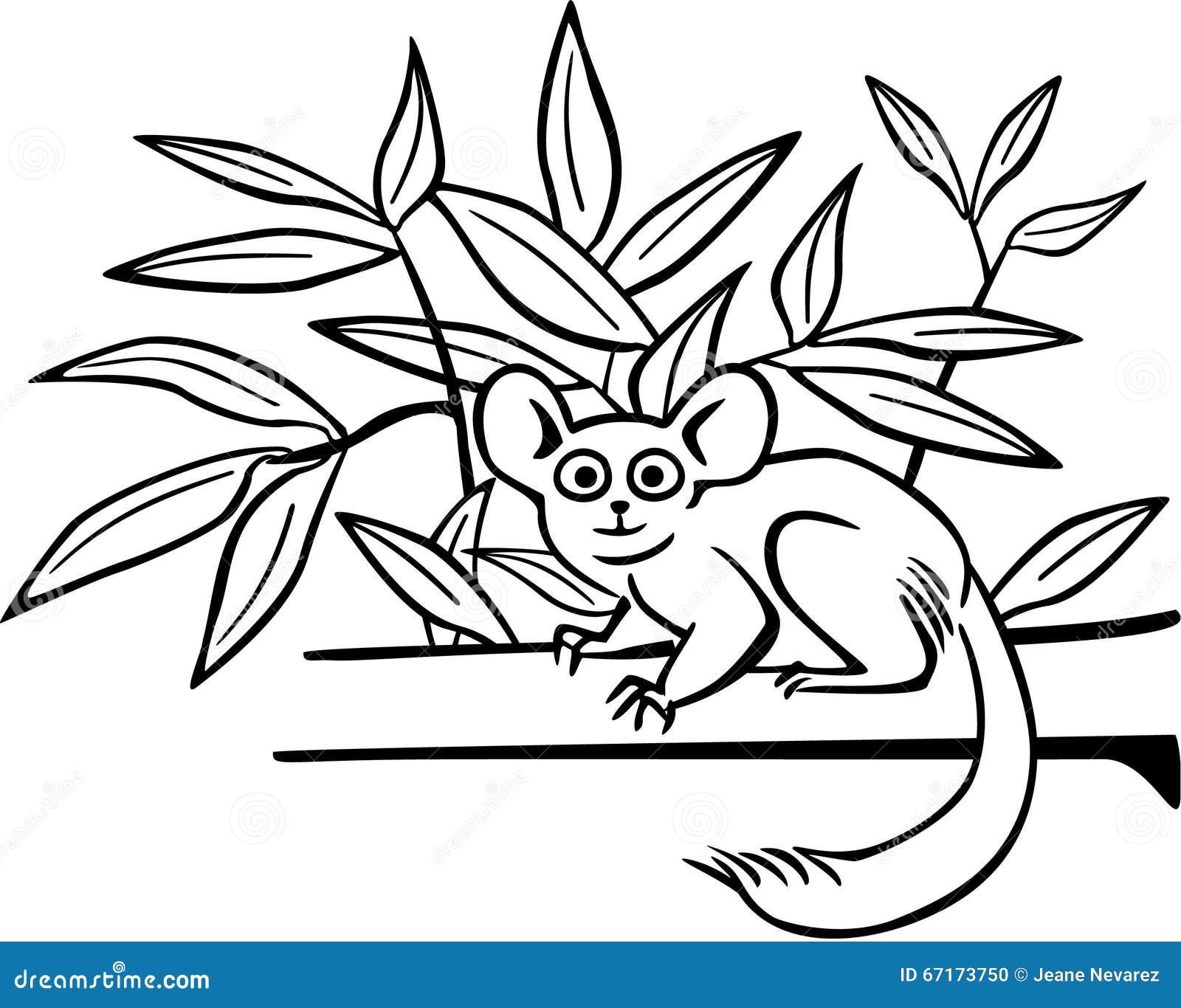 Bushbaby on a Branch stock vector. Illustration of branch ...