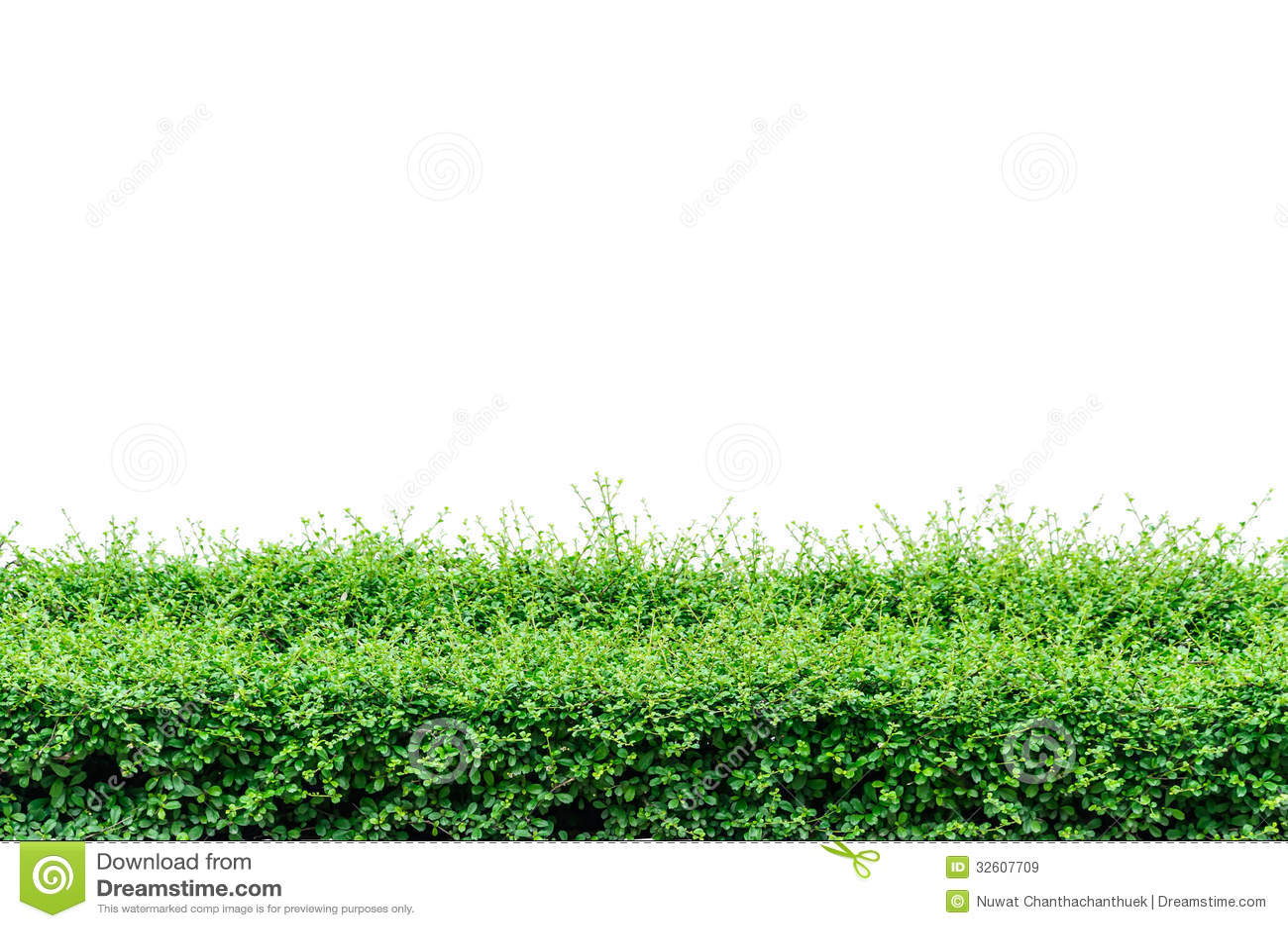 Bushes Fence Royalty Free Stock Images - Image: 32607709