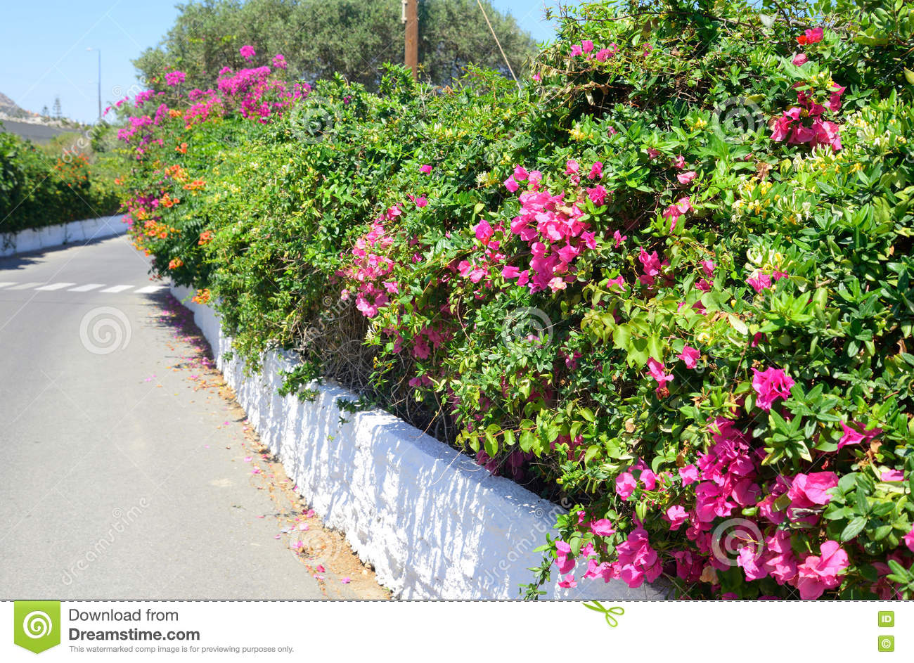 Bushes With Pink Flowers Stock Image Image Of Europe 73047565