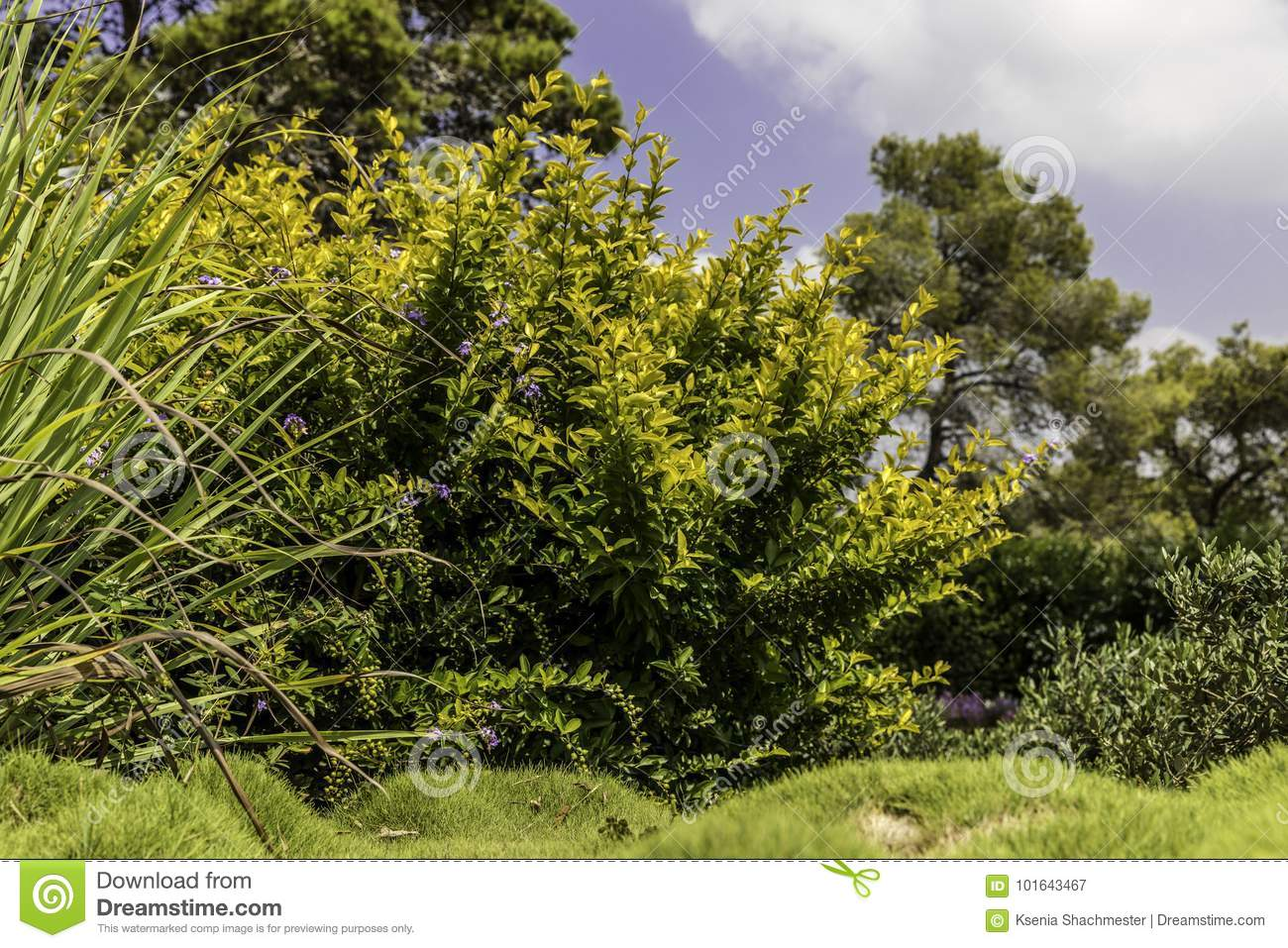 Bushes With Purple Flowers And Grass Stock Image Image Of Texture