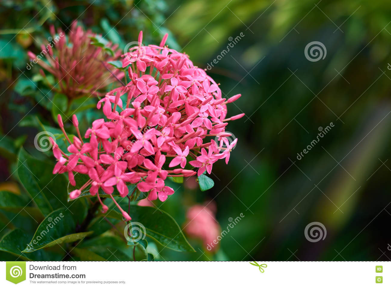 Bushes With Purple Flowers Stock Photo Image Of Garden 81210494