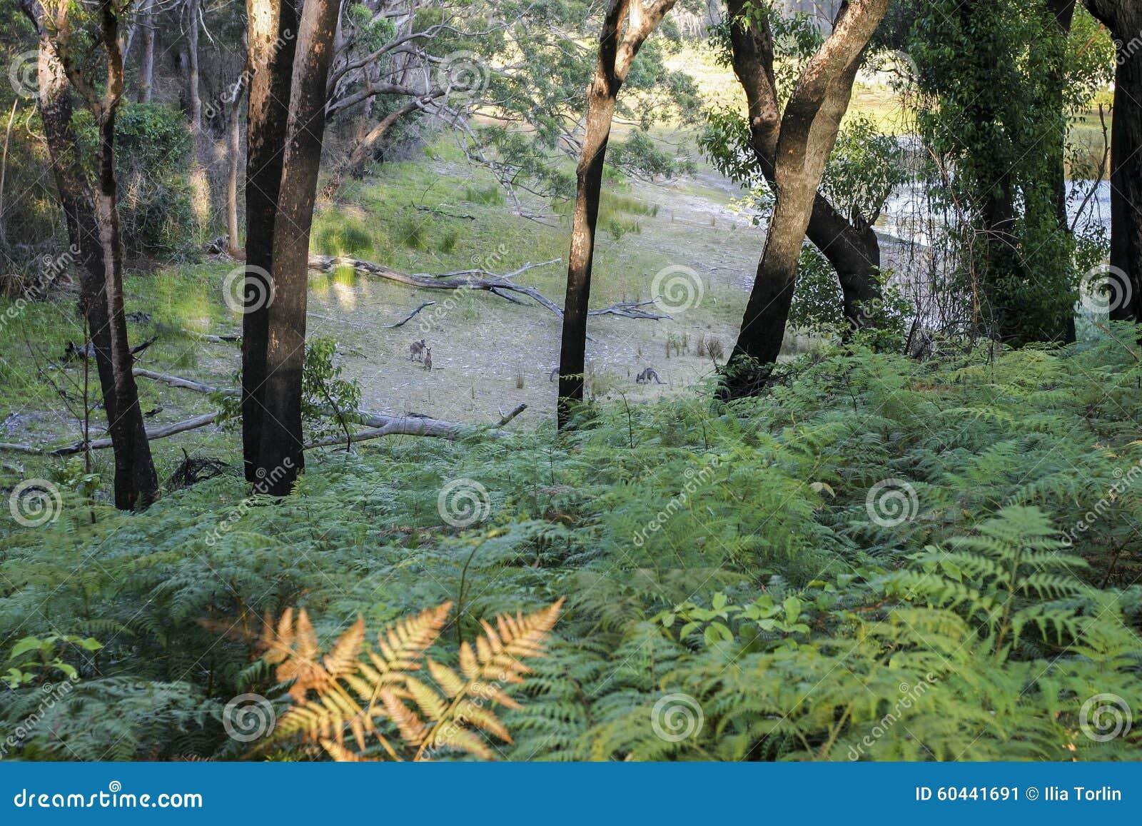 Download Bushwalking In Booderee National Park. NSW. Australia Stock Image - Image of fern, coast: 60441691