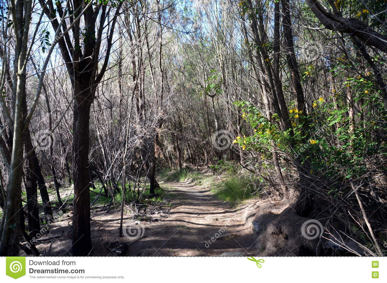 Download Bushwalking in Seaforth stock photo. Image of green, forest - 79202428