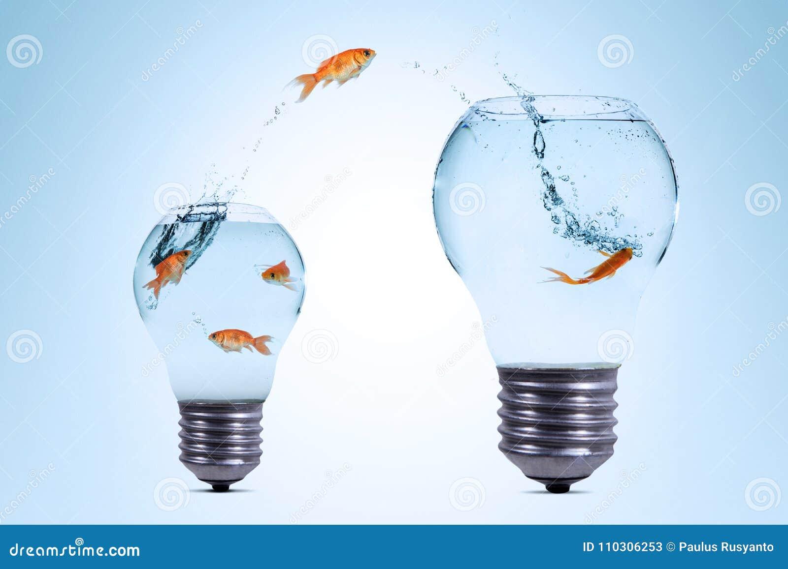 Gold fish jumping out from a smaller aquarium to bigger aquarium