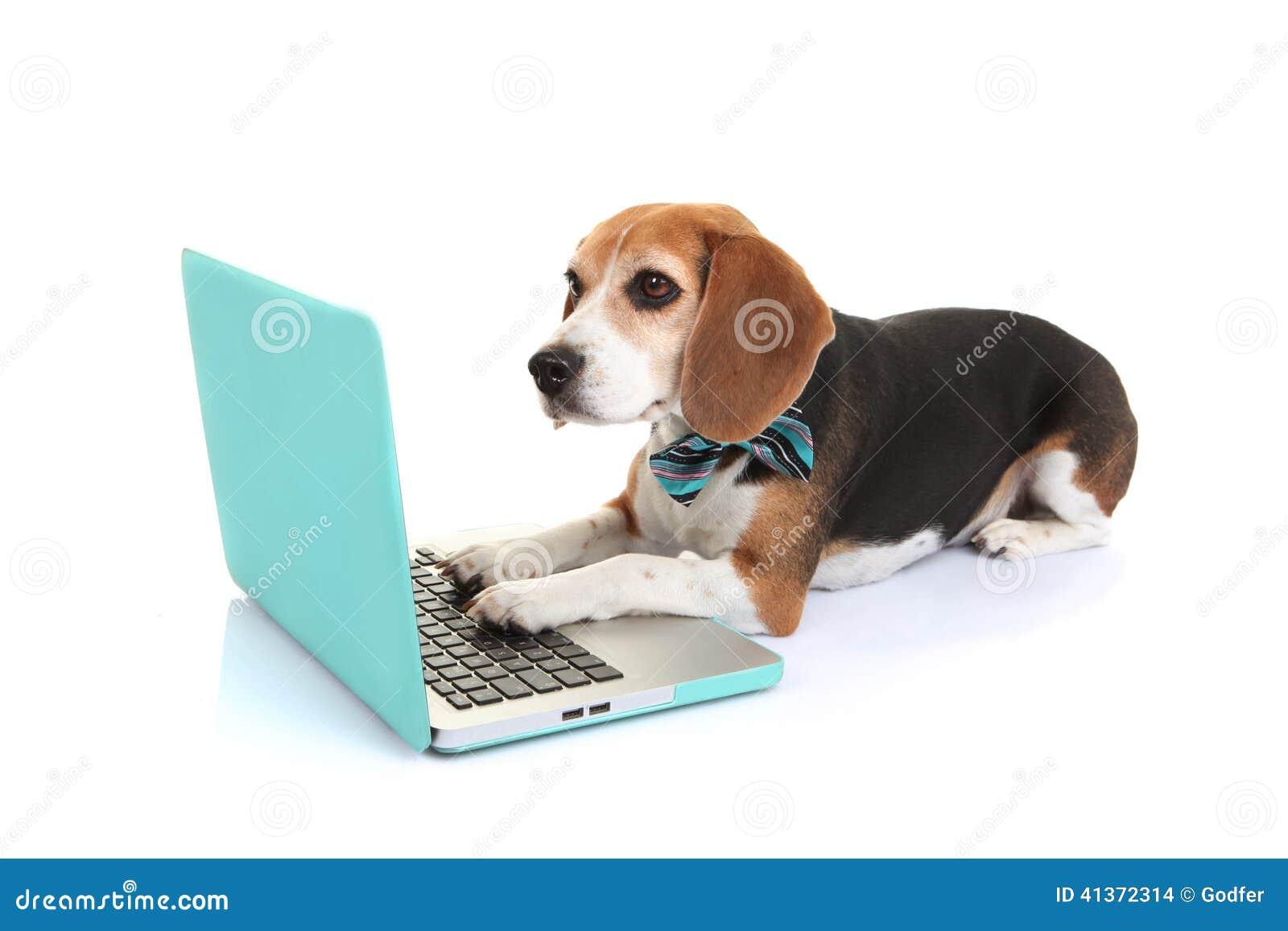 Business concept pet dog using laptop computer