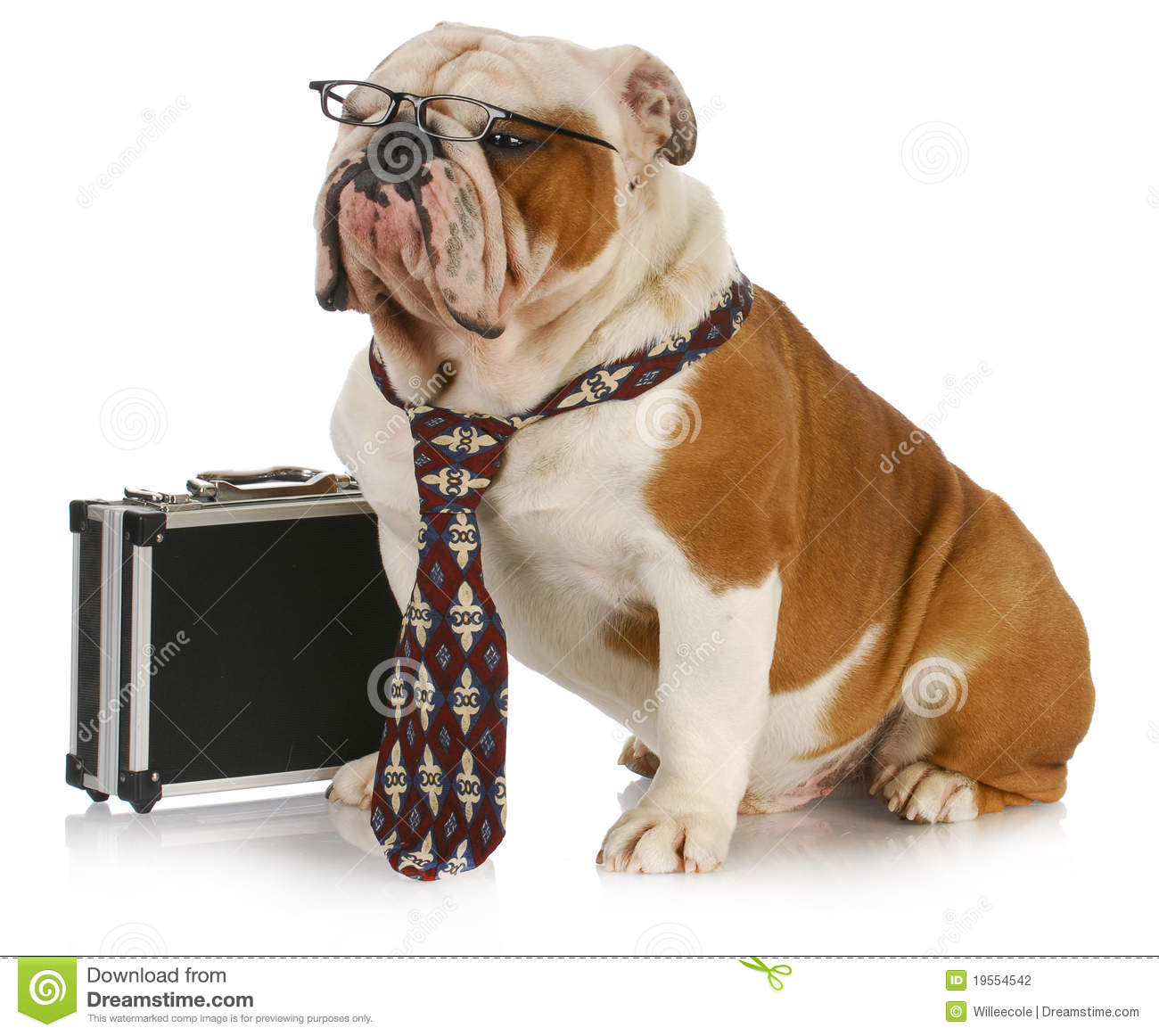 Business dog - english bulldog male wearing tie and glasses sitting ...
