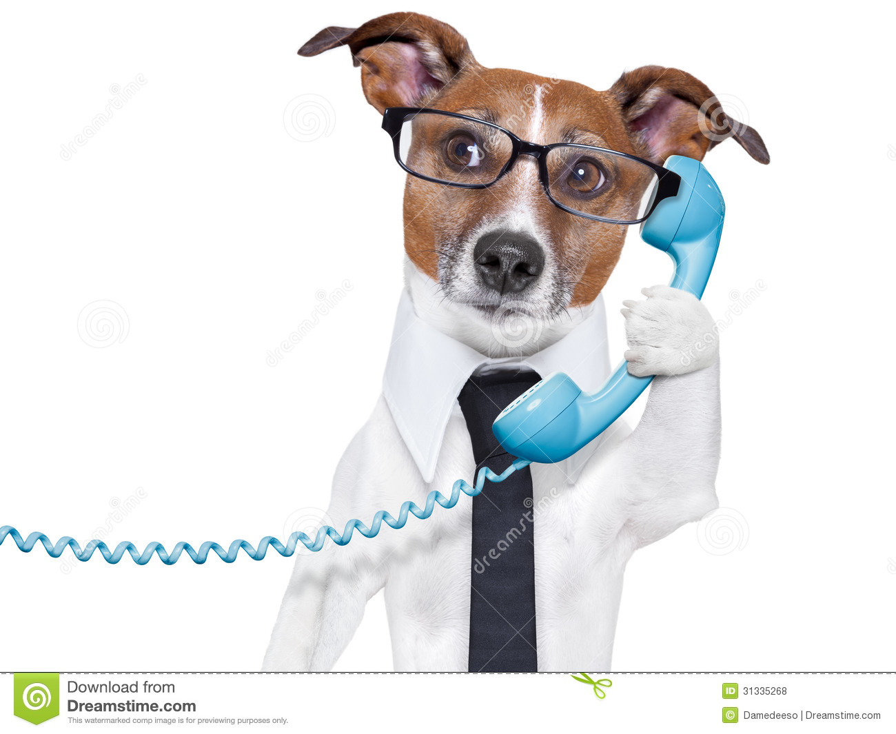 business dog on the phone stock photo image of accountant