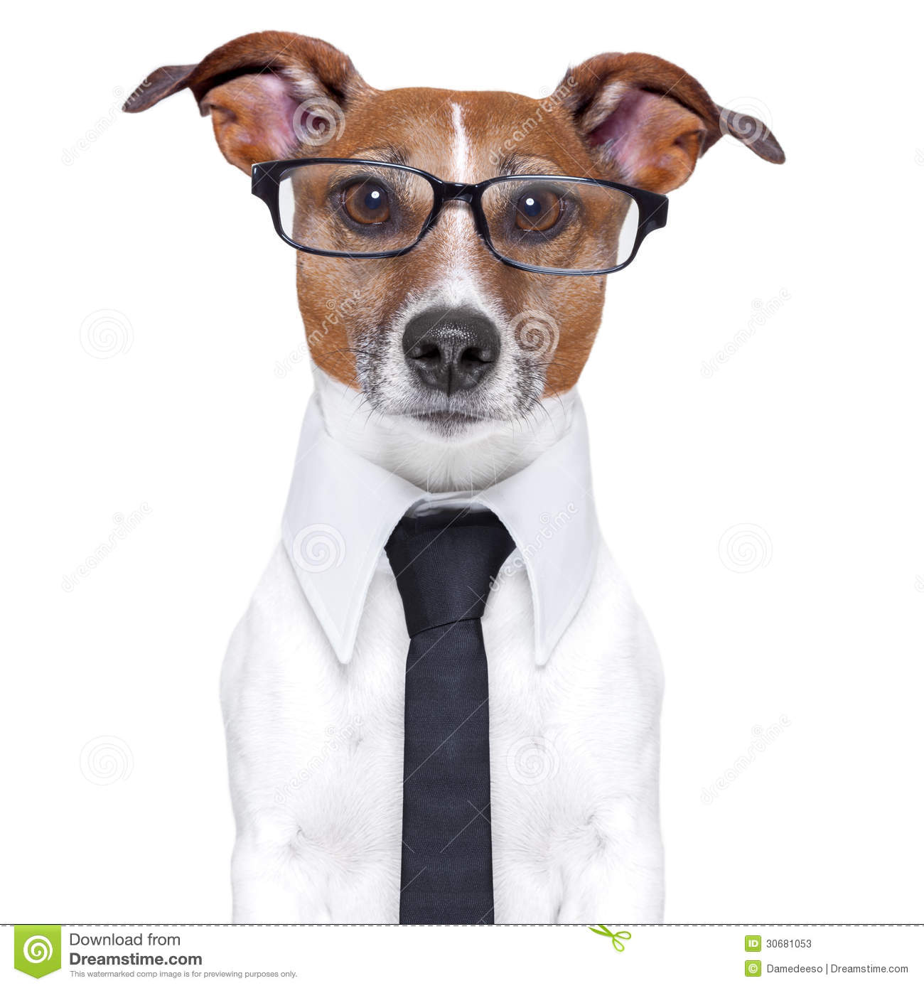 Business Dog Stock Image Image Of Report Business Funny