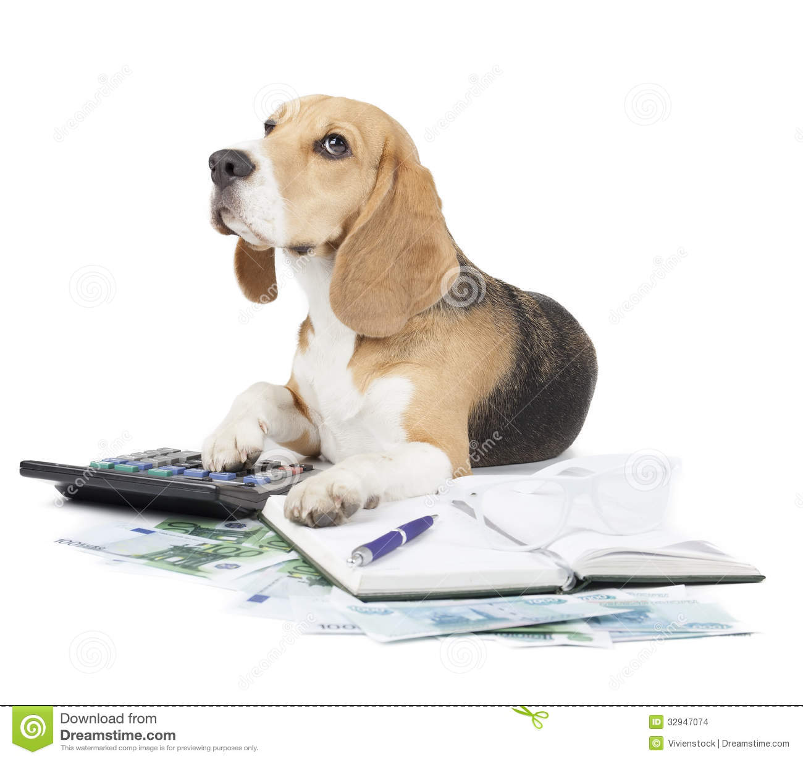 Dog Budget Calculator On Adoption