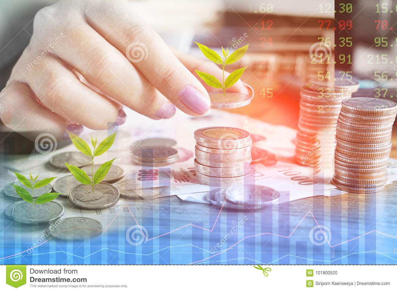 Business growth, investment,success concept with woman hand counting coin with tree growing