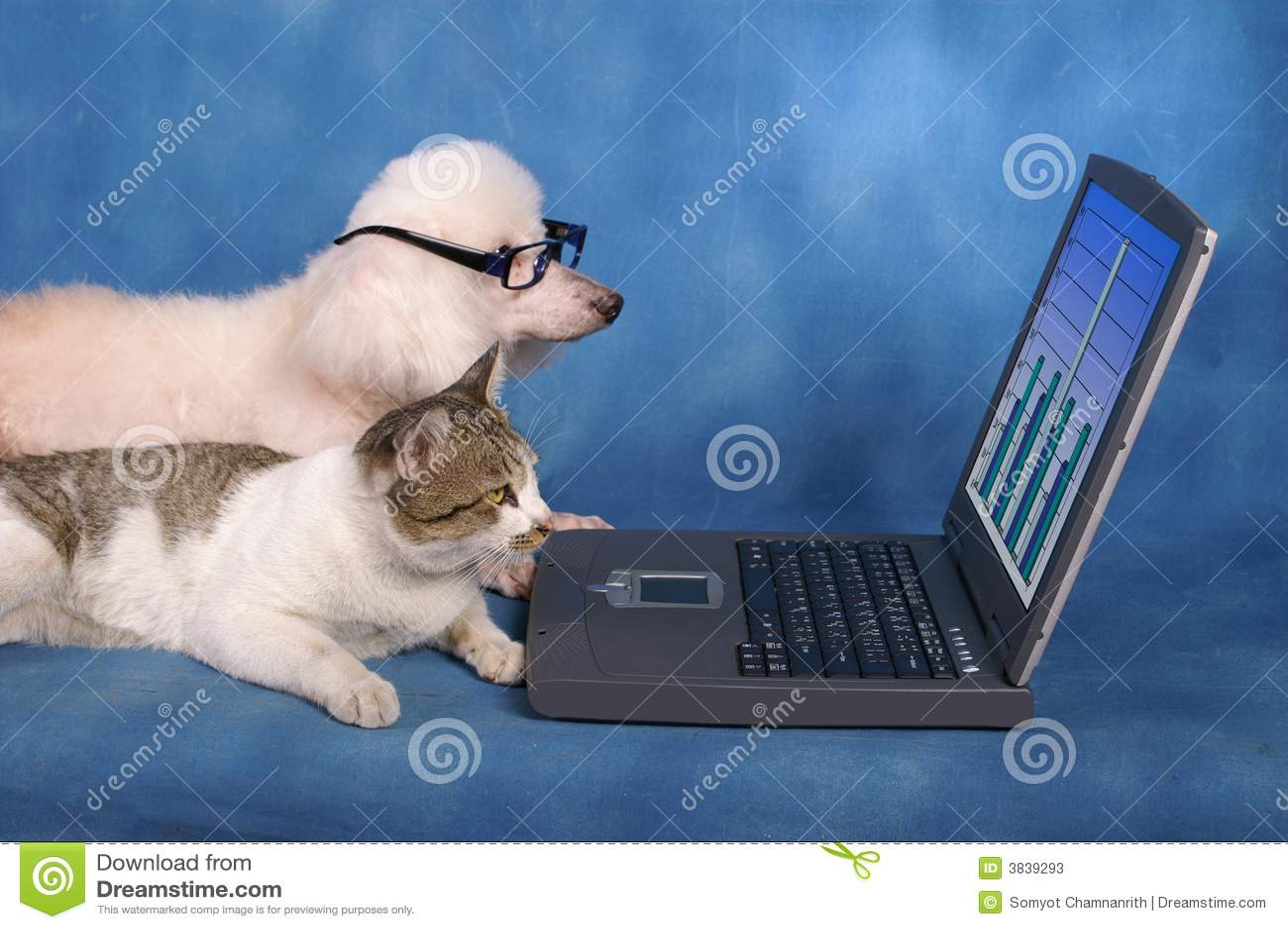Business pets