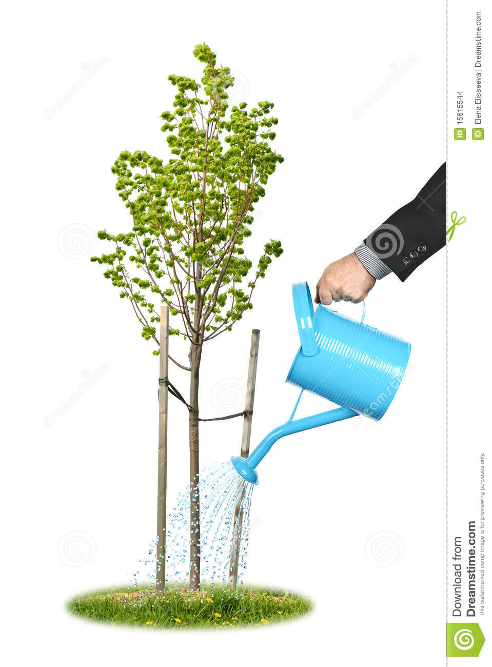 Businessman Watering Young Tree Stock Images - Image: 15615544