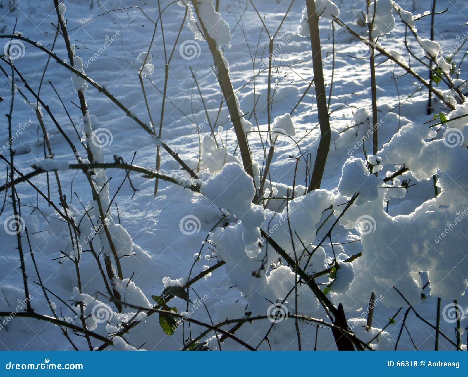Buskaget snowed