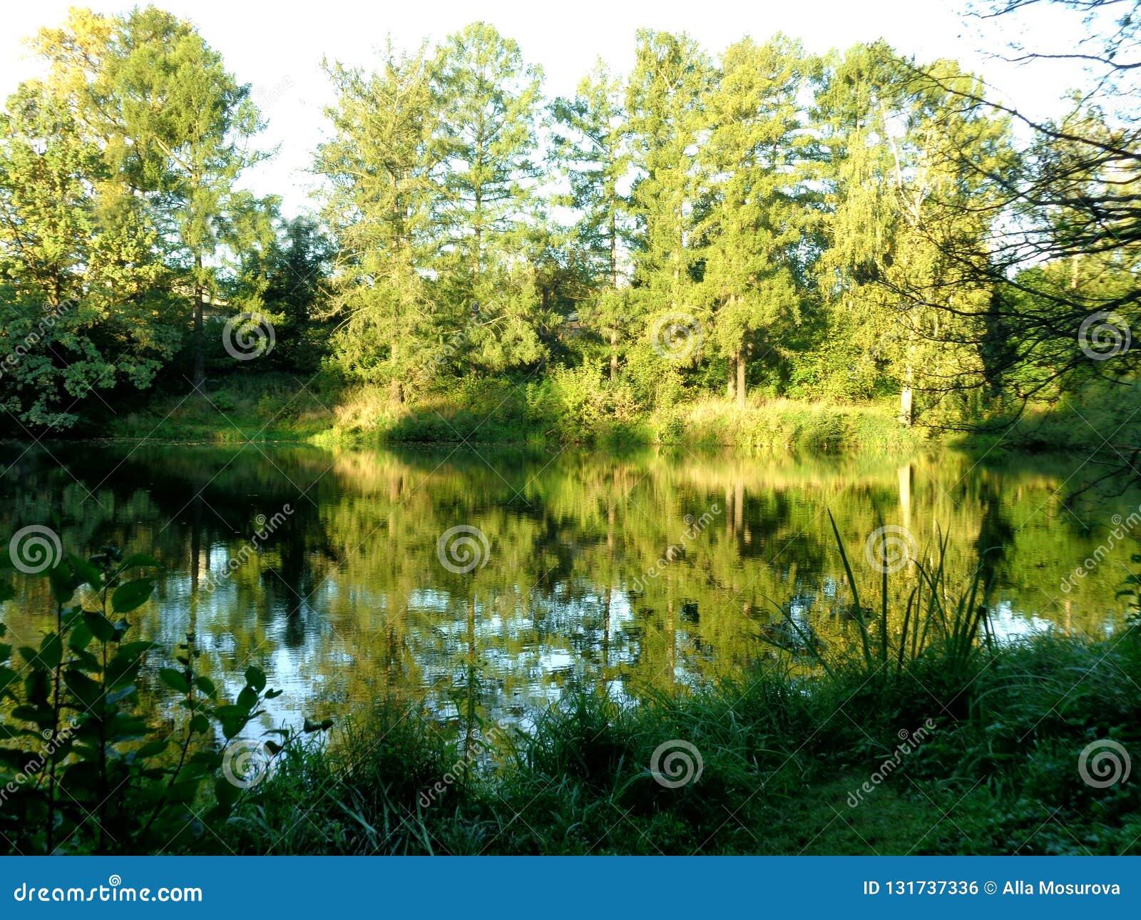 Busksnår av träd och buskar runt om dammet på en solig sommardag