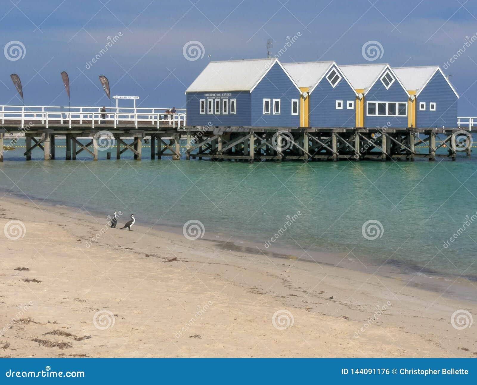 BUSSELTON, zachodnia australia, AUSTRALIA LISTOPAD 9, 2015: busselton kormorany na plaży w zachodniej australii i jetty