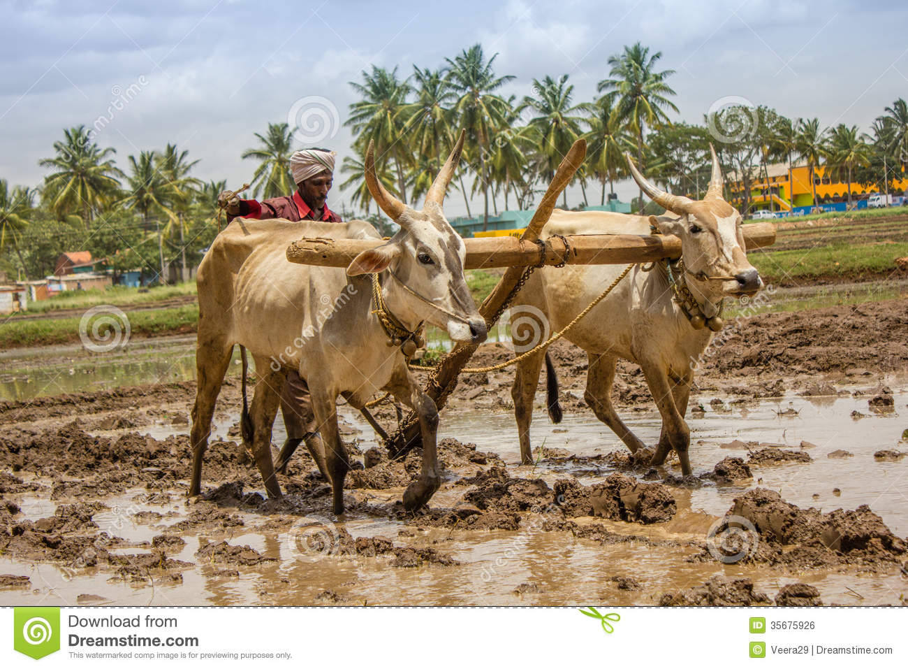 Busy Indian Farmer Editorial Photo - Image: 35675926