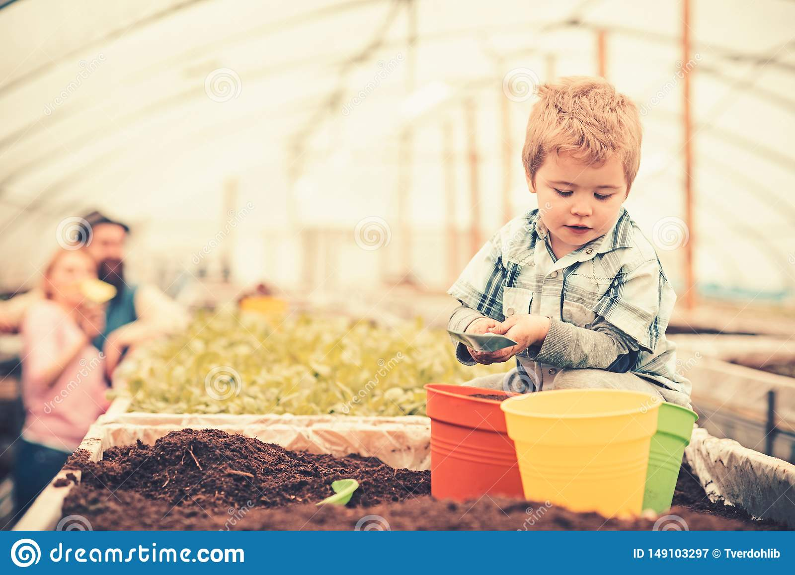 Busy kid filling orange, green and yellow pots with soil. Cute blond boy playing in greenhouse while his parents stand